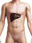 3d rendered medical illustration of a male liver