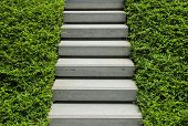 Stairway With Green Plant