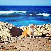 Coastline With Ginger Tabby Roar Cat