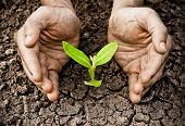 foto of save water  - hands holding tree growing on cracked earth  - JPG