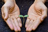 stock photo of nurture  - hands holding and nurturing a young green plant - JPG