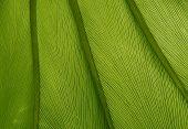 Green Leaf Texture 05