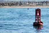 Buoy Sea Lions