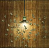 pic of moth  - Moths flight around a chandelier attracted to the light in a decadent interior - JPG
