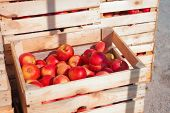 Several Wooden Boxes With Red Apples
