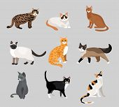 image of nocturnal animal  - Set of cute cartoon kitties or cats with different colored fur and markings standing  sitting or walking  vector illustrations on grey - JPG
