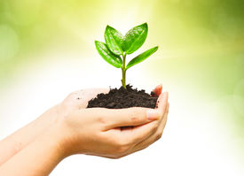 stock photo of nature conservation  - two hands holding and caring a young green plant  - JPG