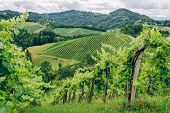 image of southern  - Grapevines in the hills of Southern Styria - JPG