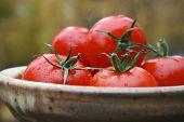 Tomato & Ceramic