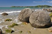foto of maori  - Moeraki Boulders are perfectly spherical rocks on the beach at Moeraki near Oamaru - JPG