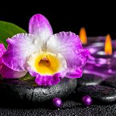 picture of calla  - spa background of purple orchid dendrobium green leaf Calla lily purple candles and beads on zen stones with drops closeup - JPG