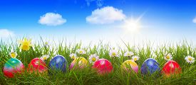 picture of green-blue  - Green grass and colorful easter eggs - JPG