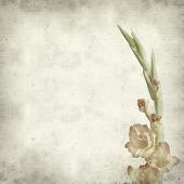 picture of gladiolus  - textured old paper background with orange gladiolus - JPG
