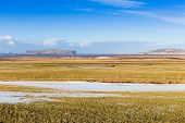 image of iceland farm  - Wheat field in late winter with beauty of blur sky - JPG
