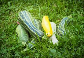 stock photo of cubit  - A heap of the vegetable marrows on grass