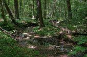 üppigen Wald