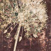 Постер, плакат: Искусство гранж Винтажные текстуры фона