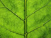 Green leaf background.
