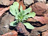 Sprout on a stones.