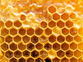 Honeycomb background.