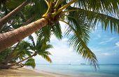 Paraíso de coco