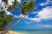 Tropicais Palms