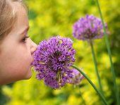 Smelling Allium