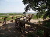Dock On Marshland