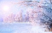 Beautiful Winter landscape scene background wit snow covered trees and ice river. Beauty sunny winte poster