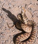 Snake hypnotized