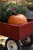 Pumpkin Wagon