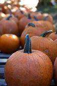 Img_9379 Pumpkins