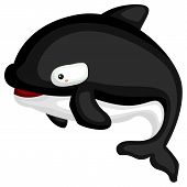 A Vector Of A Cute Killer Whale poster