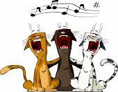Three Cat