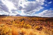Scenic view of Sierra Nevada Mountain. fall foliage landscape. California,USA. poster