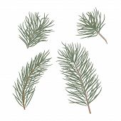 Christmas Tree Branches Set For Christmas Decor. Branches Close-up. Collection Of Pine Branches. Vec poster