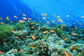 pic of coral reefs  - Coral Reef at the Blue Hole in Dahab - JPG