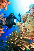 Underwater photographer and coral reef