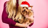 Girl Attractive Blonde Hold Dog Pet Pink Background. Woman And Yorkshire Terrier Wear Santa Hat. Cel poster