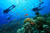 stock photo of sky diving  - Scuba Diving on a Coral Reef with Tropical Fish - JPG