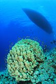 Diving Boat moored over Coral reef in Tropical Seas