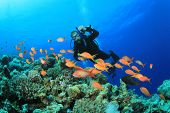 Scuba Diver swims over Coral Reef with Tropical Fish