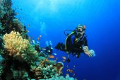 stock photo of biodiversity  - Scuba Diver and Coral Reef with Tropical Fish in the Red Sea - JPG