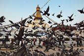Boudha Nath (Bodhnath) stupa flight of doves, Nepal