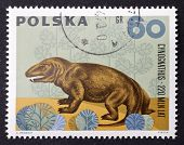 POLAND - CIRCA 1966: a stamp printed in Poland shows image of Cynognathus, a prehistoric predator ex