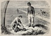 Antique illustration of Peewit's's eggs harvesting in Frisia. Original engraving, from a drawing of Marc after sketch of  Gauthier Stirum, published on L'Illustration, Journal Universel, Paris, 1860