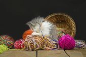 Cute Kitten In Basket With Balls Of Yarn poster