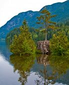Flooded nurse tree at Bunzen Lake, Vancouver, Canada.