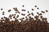 coffee bean on the plain background