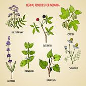 Best Herbal Remedies For Insomnia. Hand Drawn Set Of Medicinal Herbs poster